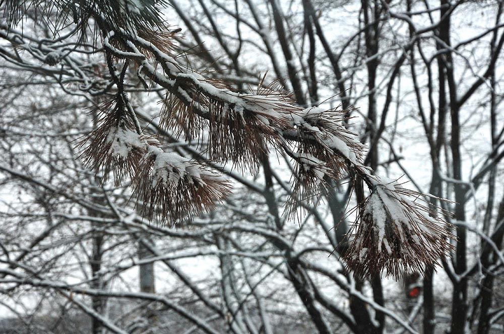 neige budapest