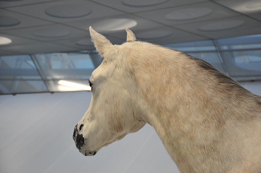 Le cheval, le premier moyen de locomotion de l'homme, après tout...