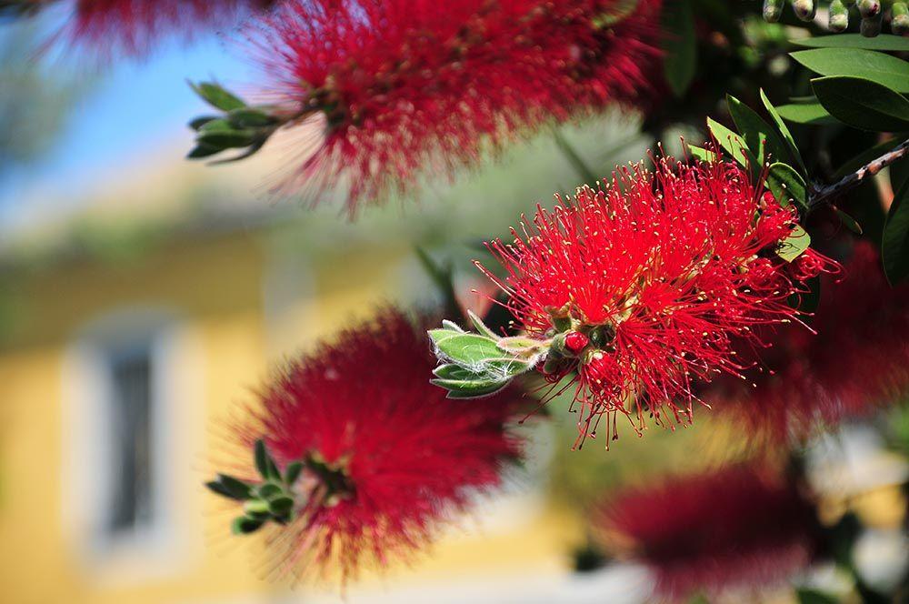 fleurs Séville, Andalousie
