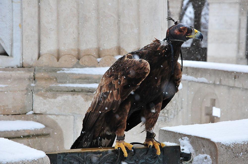 Bastion des Pêcheurs Budapest aigle