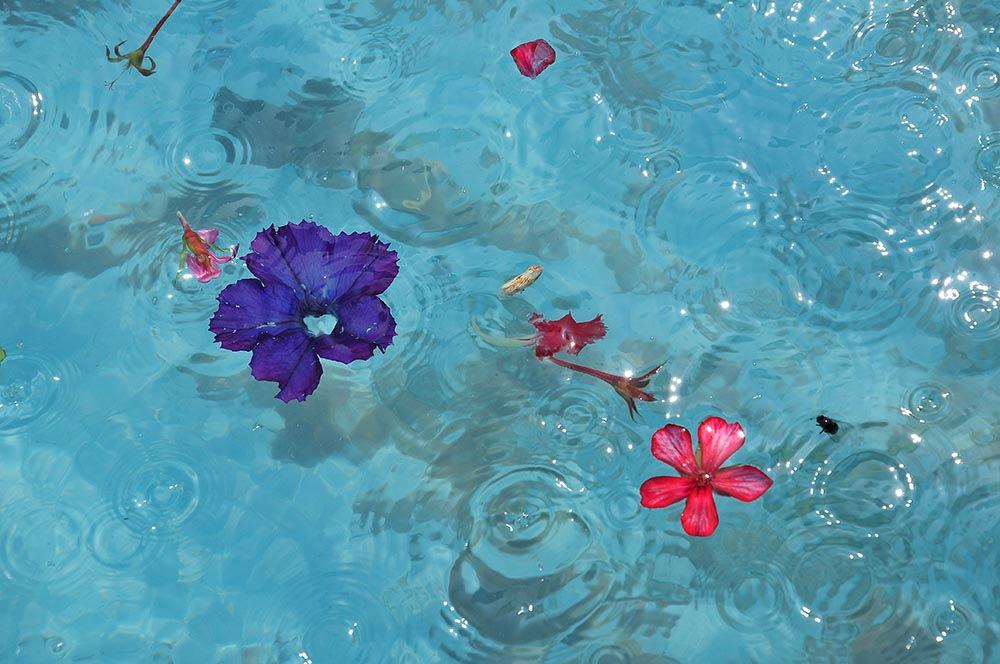 photo du mois eau malaga