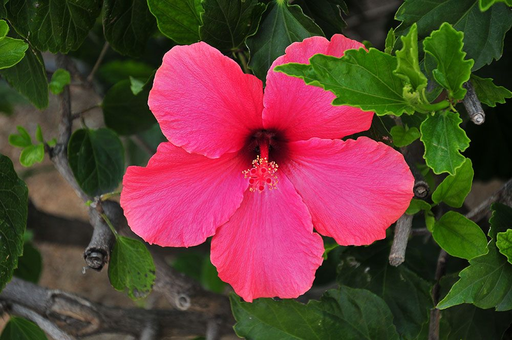 Malaga fleurs Espagne