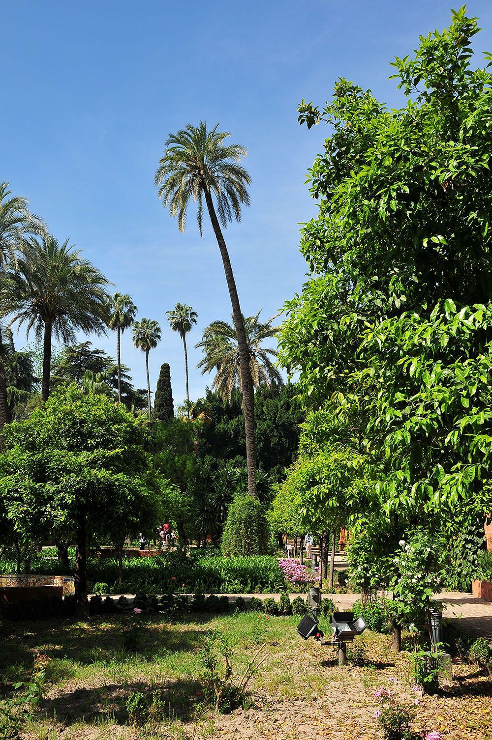 jardins de l''Alcázar  Séville
