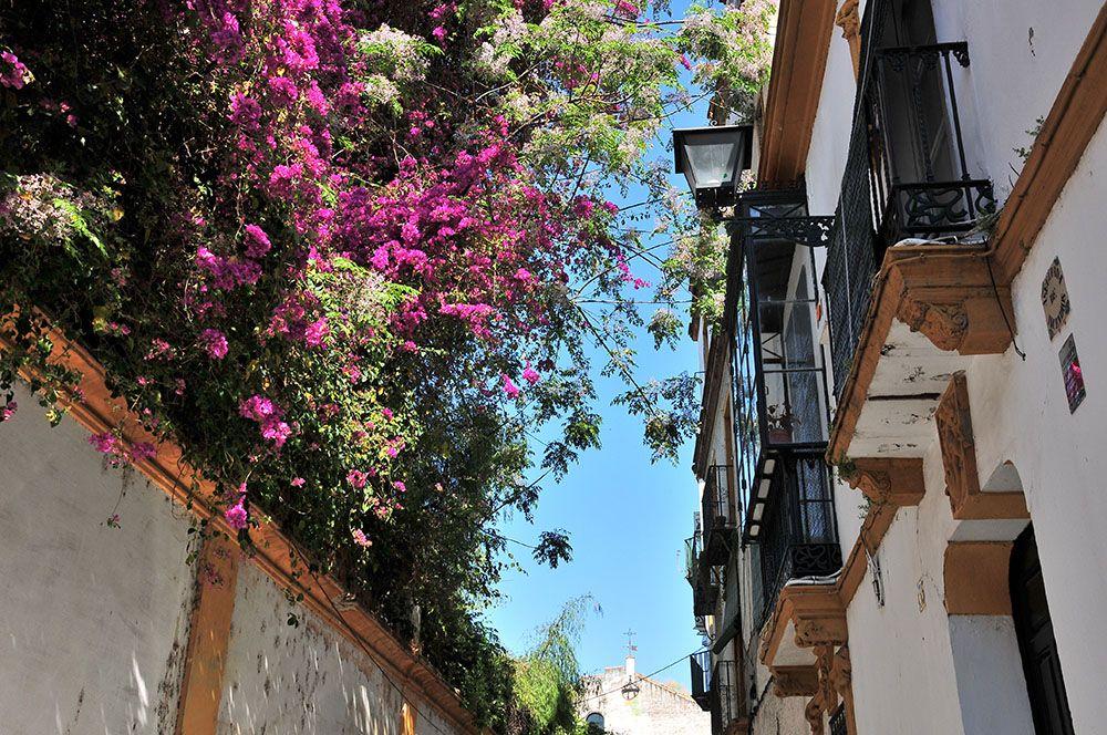 Andalousie fleurie