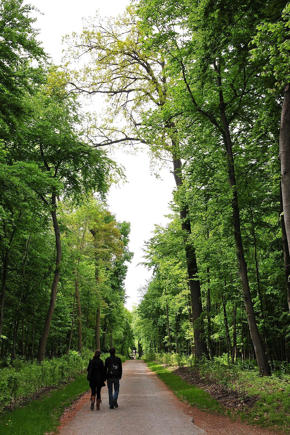 bois de chantilly