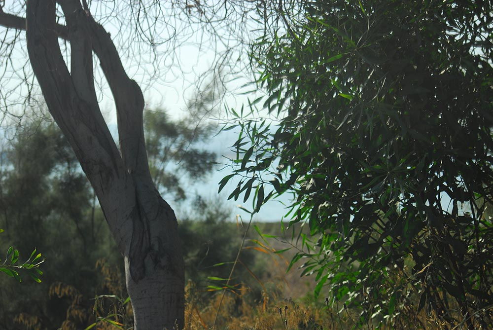 Larnaca nature