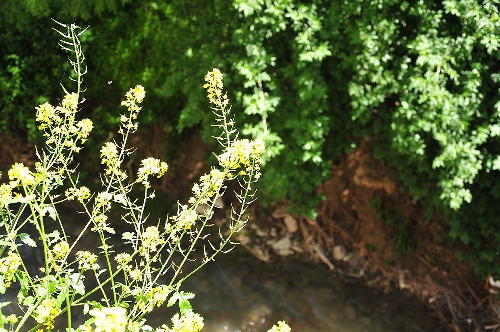 Grenade fleurie