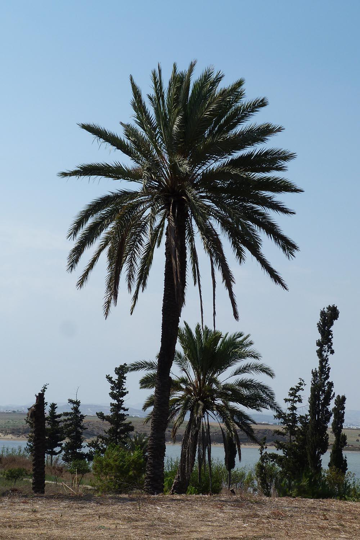 Hala Sultan Tekke Larnaca