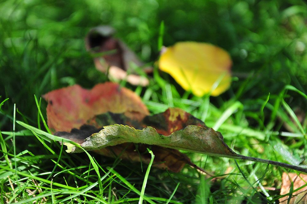 photo du mois, au ras du sol