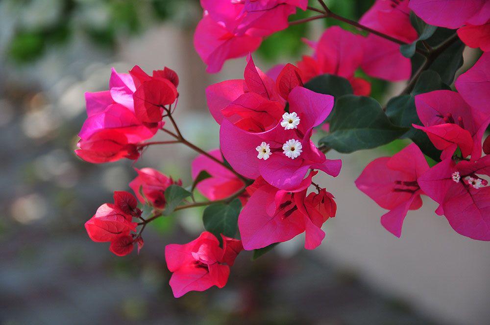 couleurs et fleurs en Sardaigne