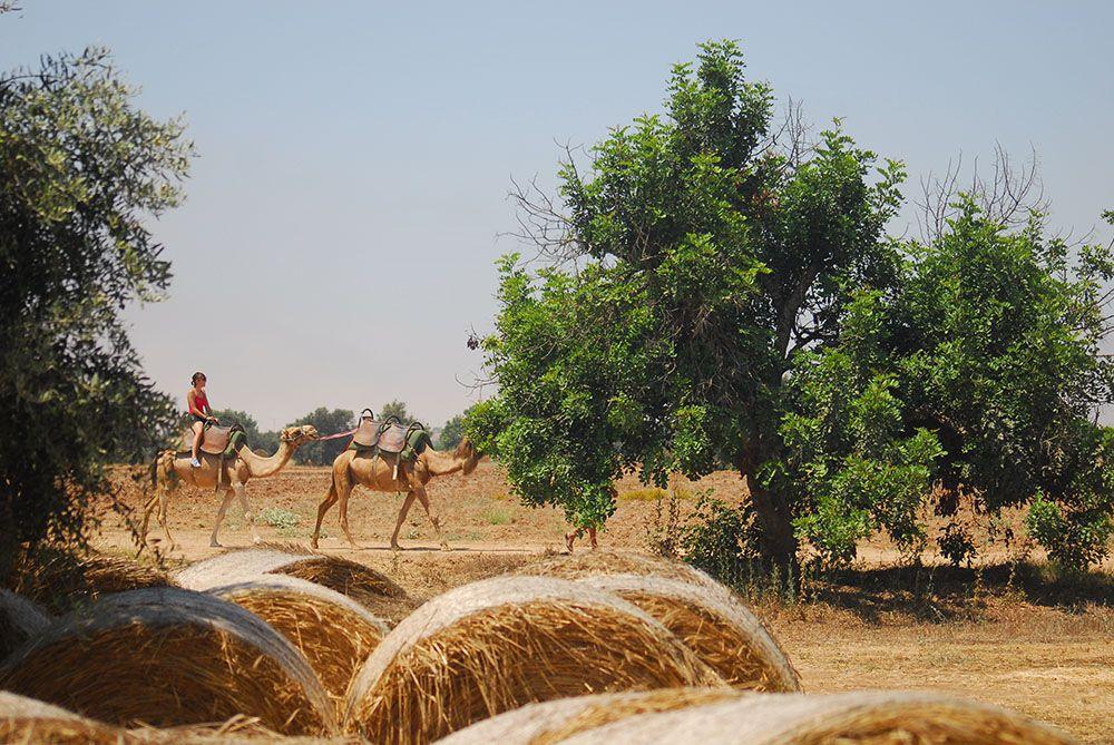 camel park , Mazotos, Chypre