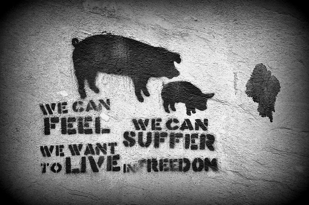 street art Gand, lutte contre maltraitance animale