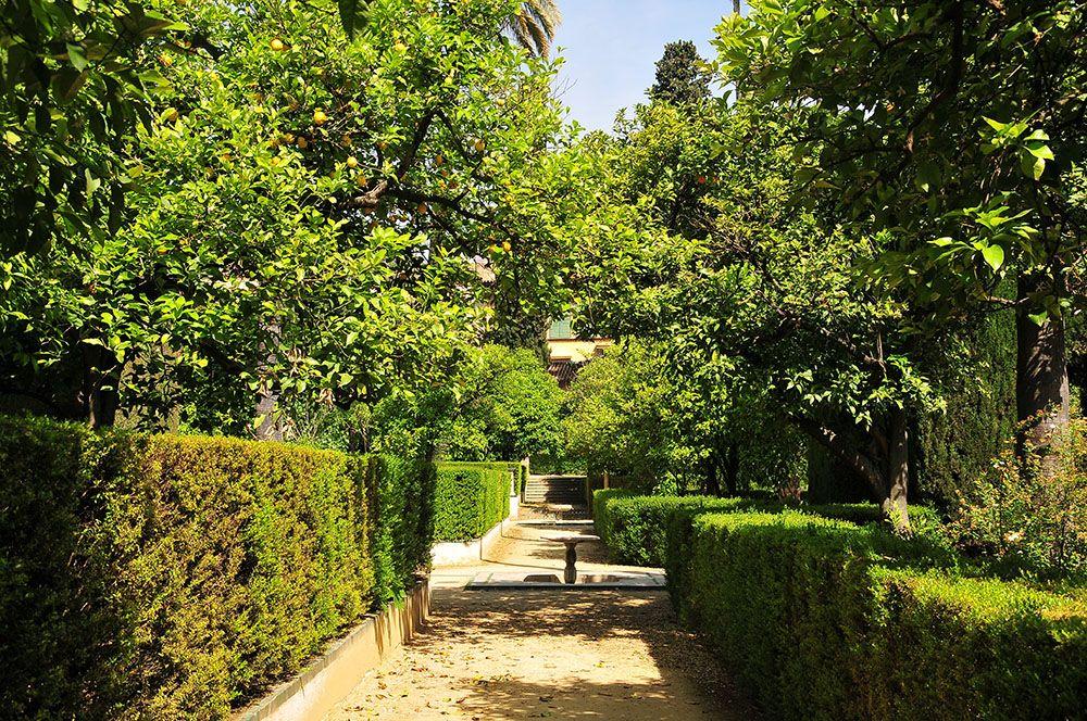Real Alcazar Séville jardins