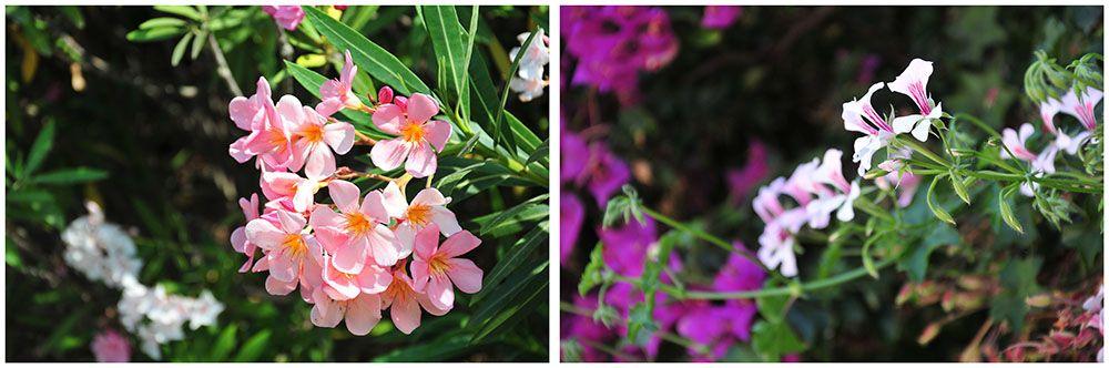 fleurs cagliari, sardaigne