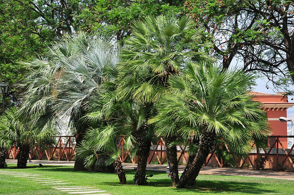Jardins publics, giardini pubblici, cagliari, sardaigne