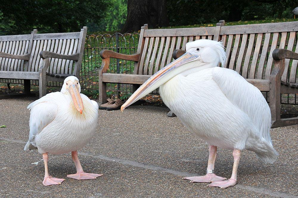 St James's Park, Londres