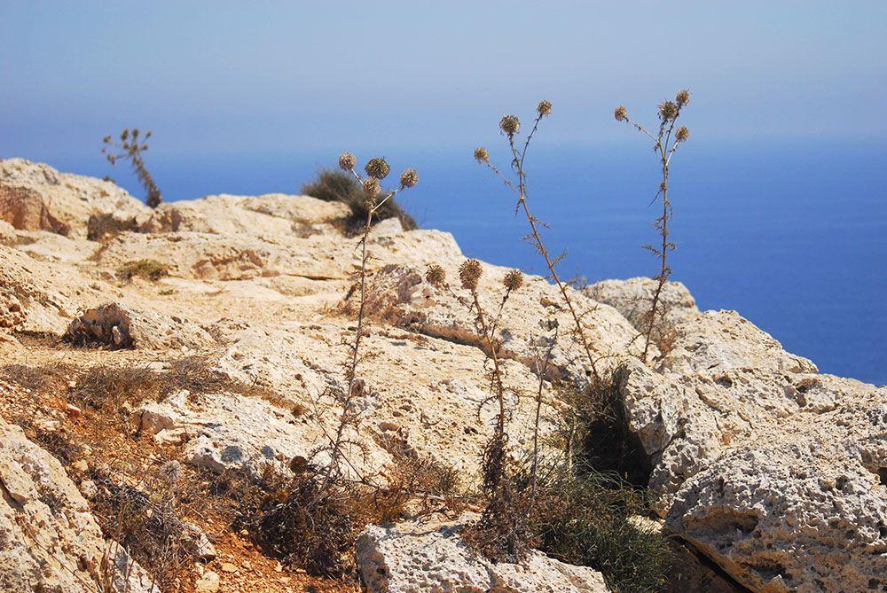 cap greco Chypre, ayia napa