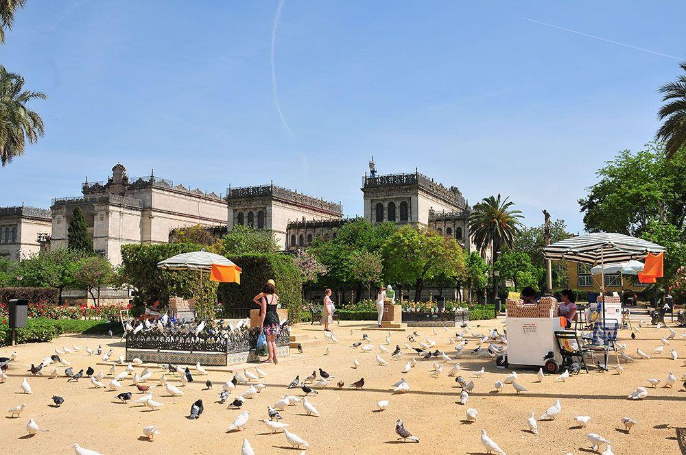 pigeons séville