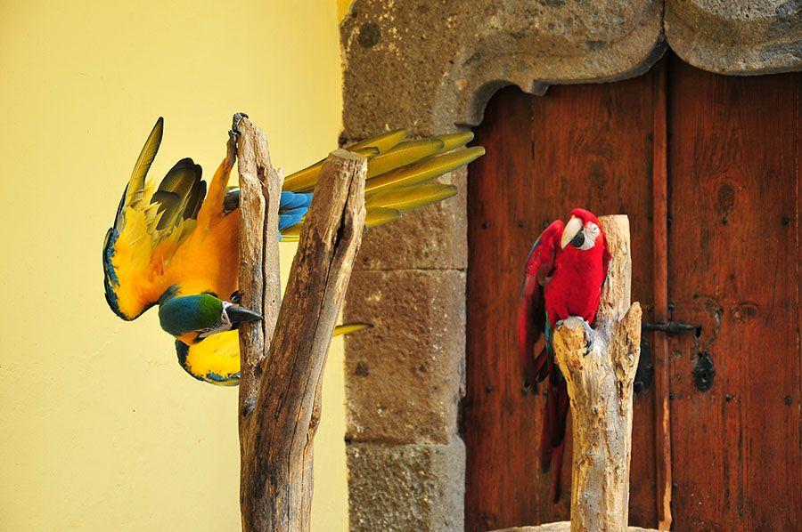 maison de christophe colomb, las palmas