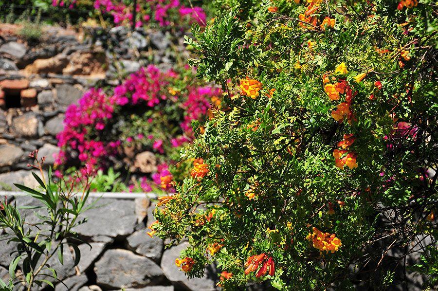végétation, canaries