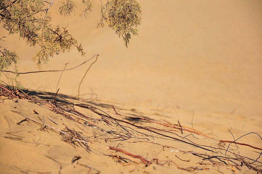 les dunes de maspalomas