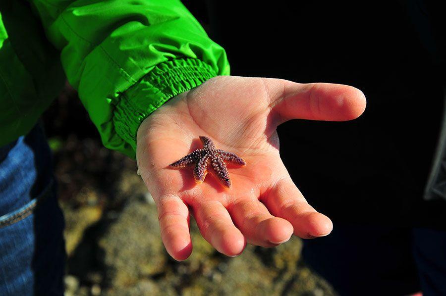 étoile mer bretagne