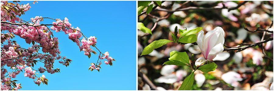 printemps irlande