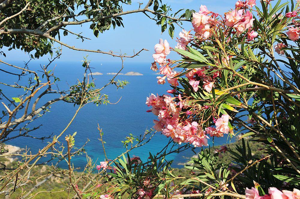 La dolce vita en Sardaigne