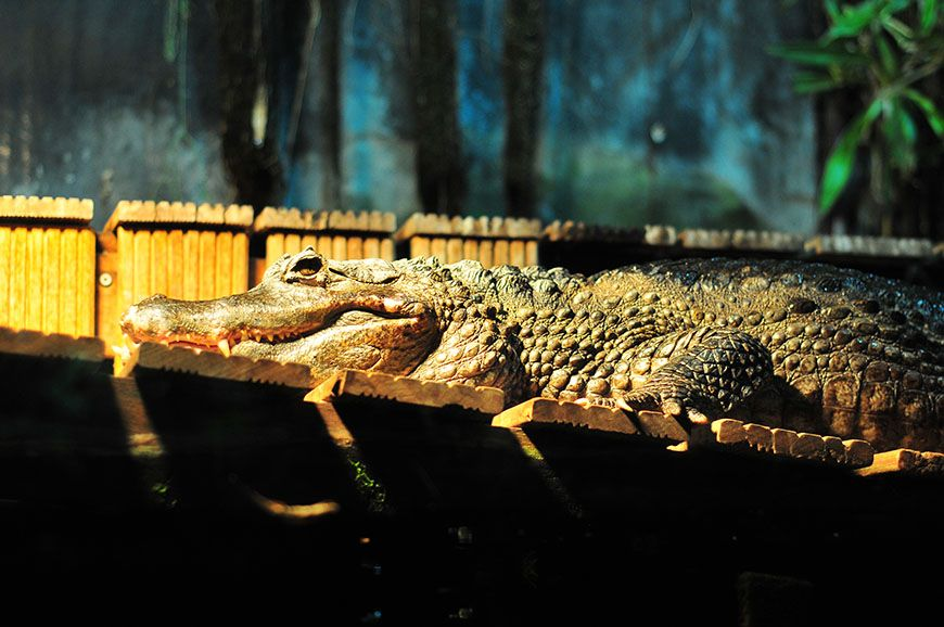 nausicaa crocodile