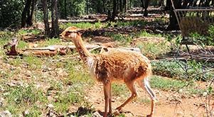 Le zoo de Lunaret à Montpellier
