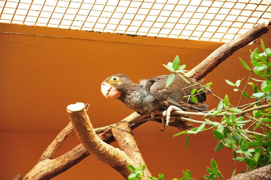 zoo et serre amazonienne de montpellier