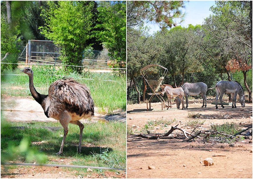 zoo et serre amazonienne de montpellier1