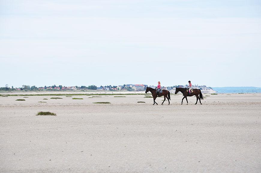 baie de somme, chevaux