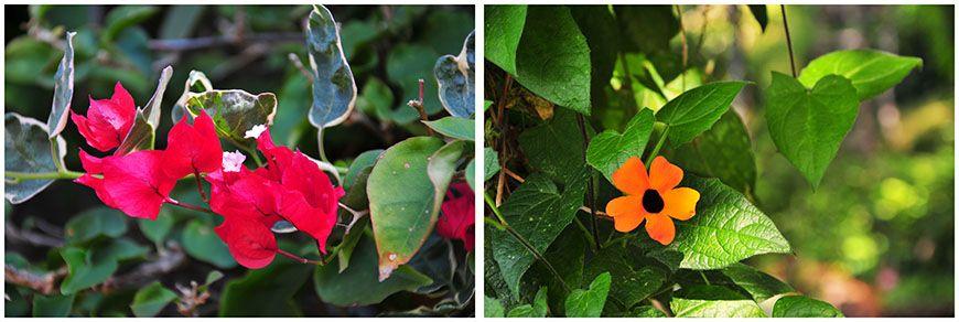 jardin botanique de funchal madère