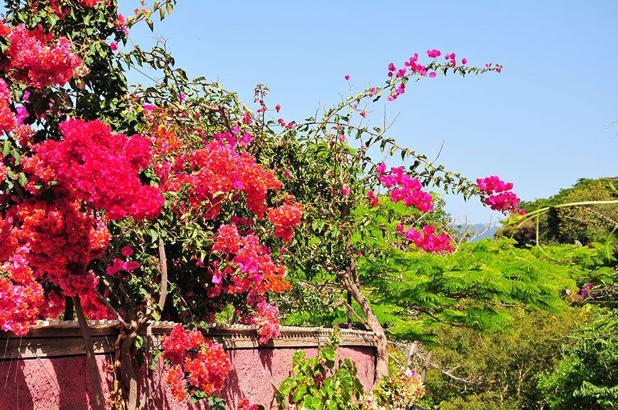 Funchal explosion de couleurs au jardin botaniquemy sweet for Jardin botanique ouverture 2015