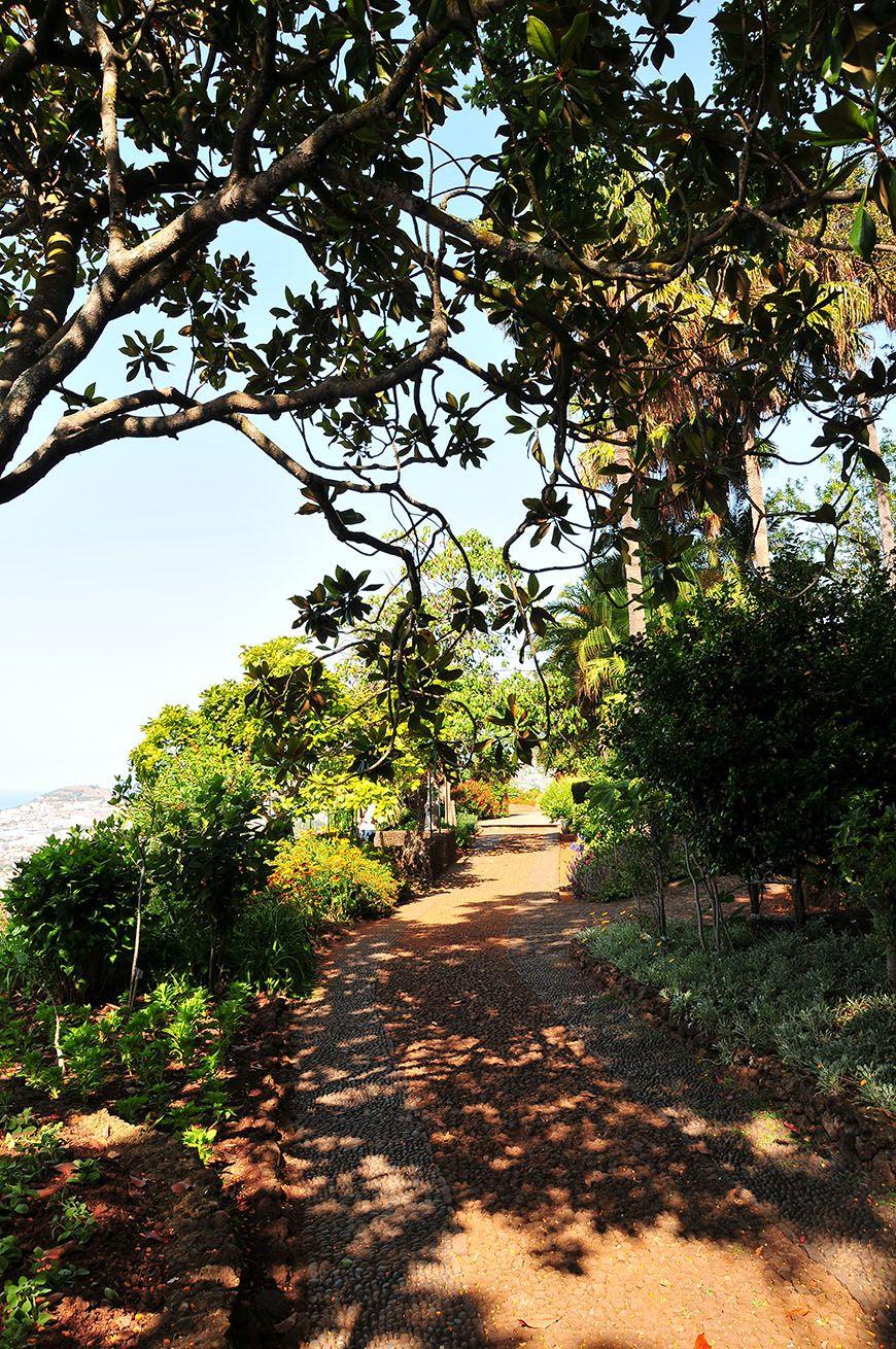 Funchal explosion de couleurs au jardin botanique for Jardin botanique hiver 2015