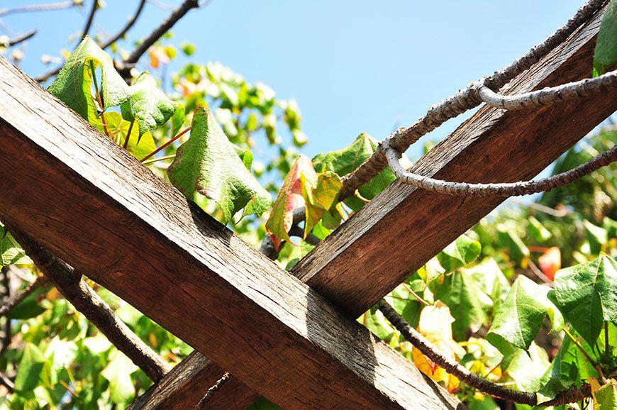 Funchal explosion de couleurs au jardin botaniquemy sweet for Jardin botanique hiver 2015