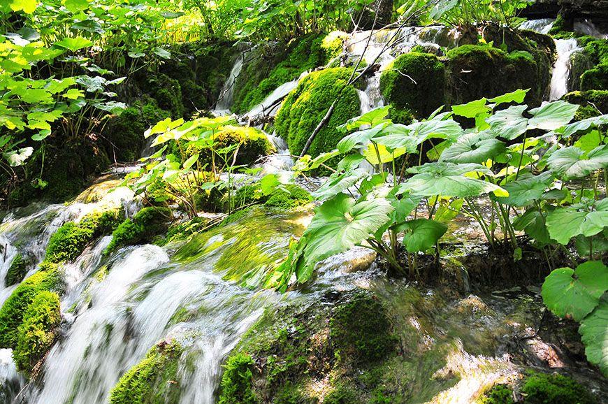 Cascade au parc de Plitvice en Croatie