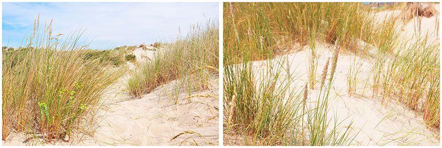 dunes de Fort-Mahon