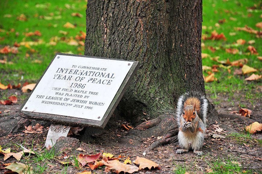 écureuil à londres