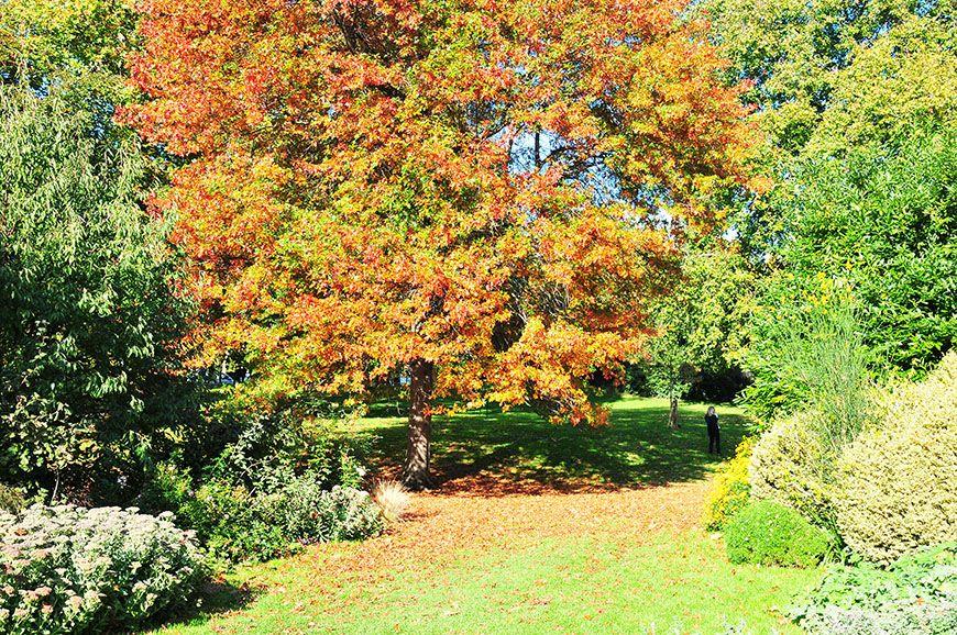 automne à Londres: saint james park