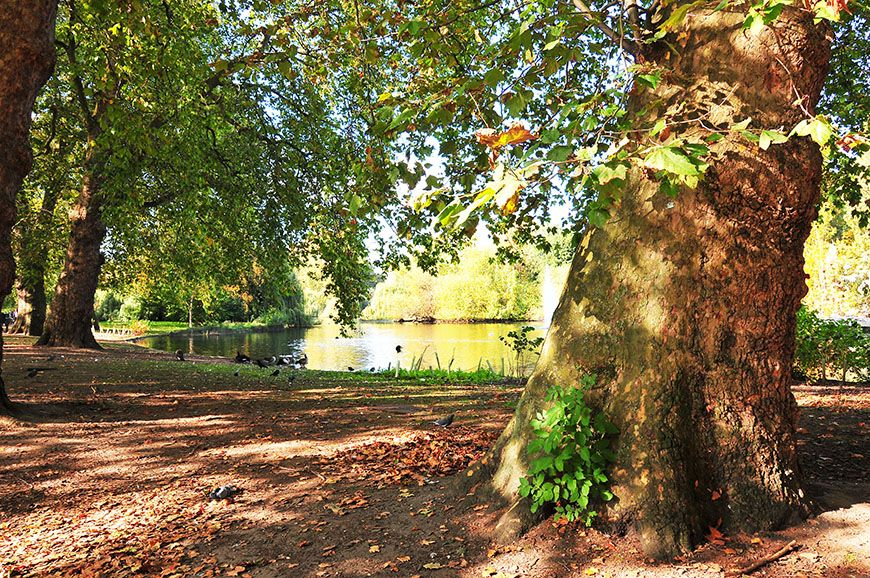 automne-londres-saint-james-park (19)