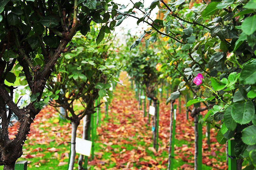 jardin des roses vienne