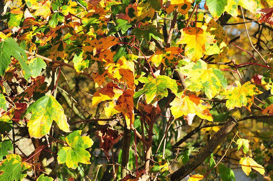 automne en picardie canal de saint-quentin