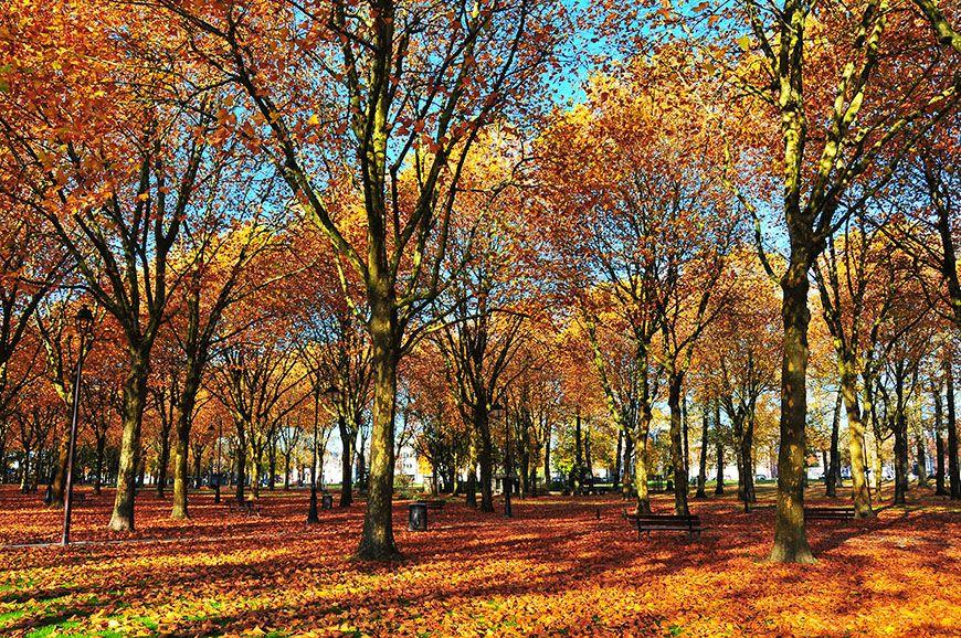 automne en picardie champs elysées