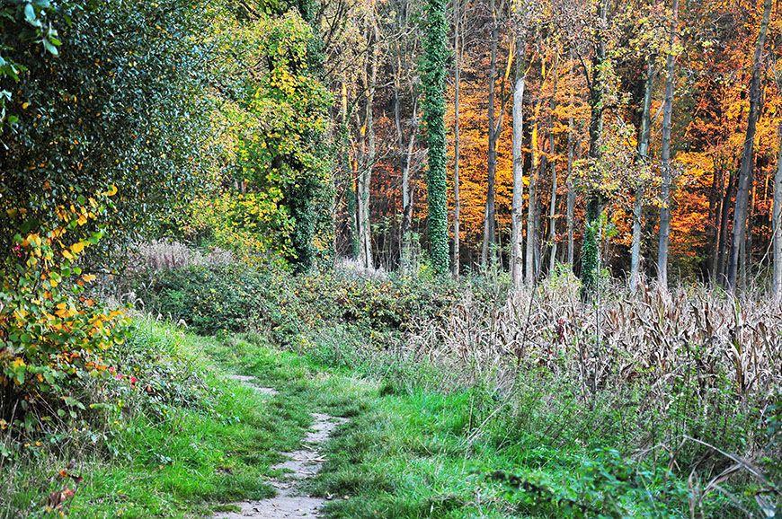 automne en picardie bois d'holnonautomne en picardie bois d'holnon