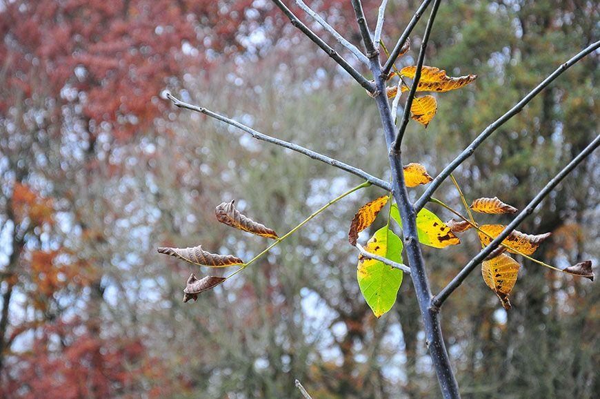 automne en picardie bois d'holnon