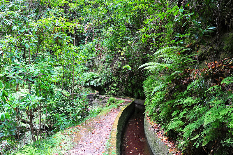 levada à madère: randonnée ribeira da janela près de porto moniz à madère