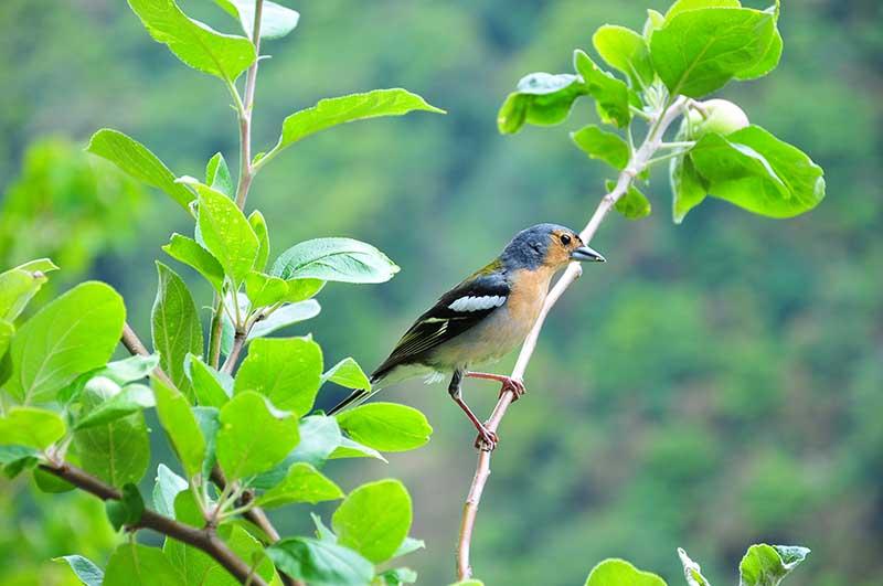 randonnée ribeira da janela près de porto moniz à madère oiseaux