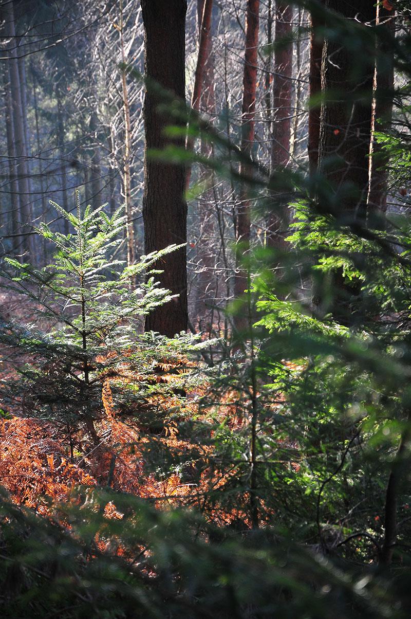balade dans la forêt de la petite-pierre en hiver, en Alsace